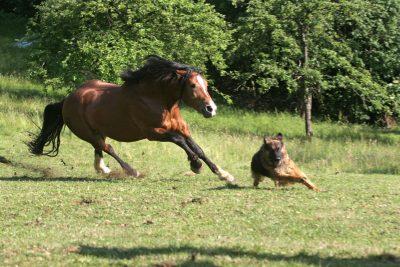 Boss-Assekuranz Berlin - Tierhalter-Haftpflichtversicherung